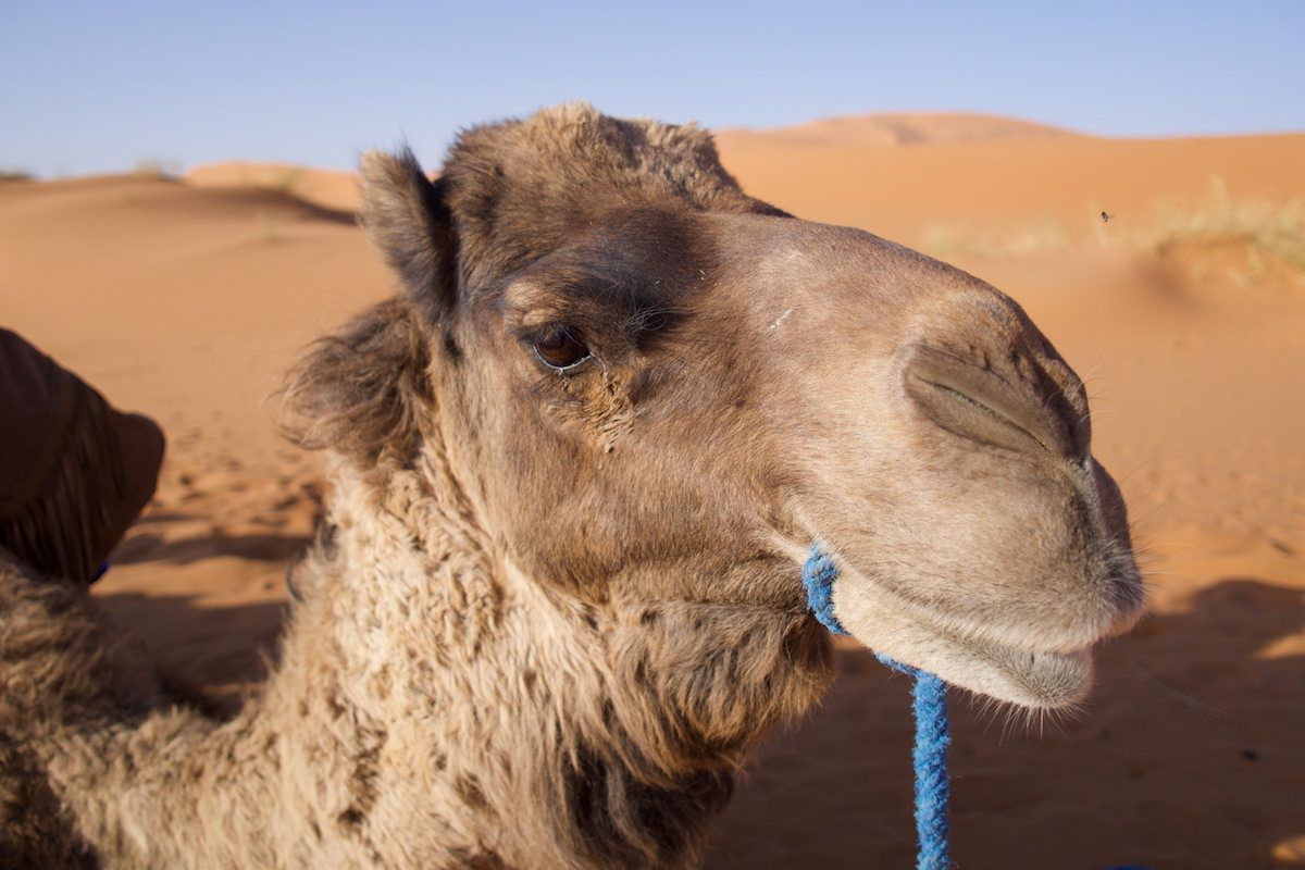 Sahara Desert in Merzouga, Morocco 2019